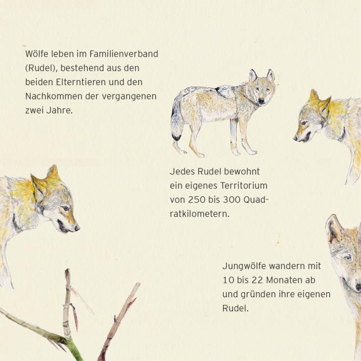 Wölfe In Brandenburg Karte.Wölfe In Brandenburg Das Sind Die Zehn Wichtigsten Fakten Rbb24