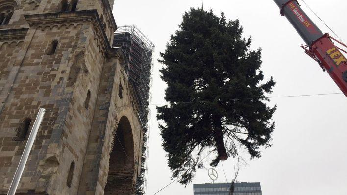 Weihnachtsbaum Berlin.20 Meter Tanne Aus Schönefeld Weihnachtsbaum Auf Berliner
