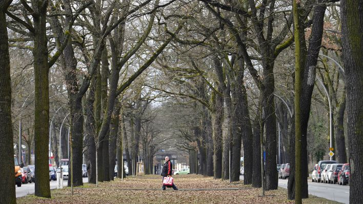 Hier Gibts Die Meisten Straßenbäume In Berlin Es Grünt So Grün In