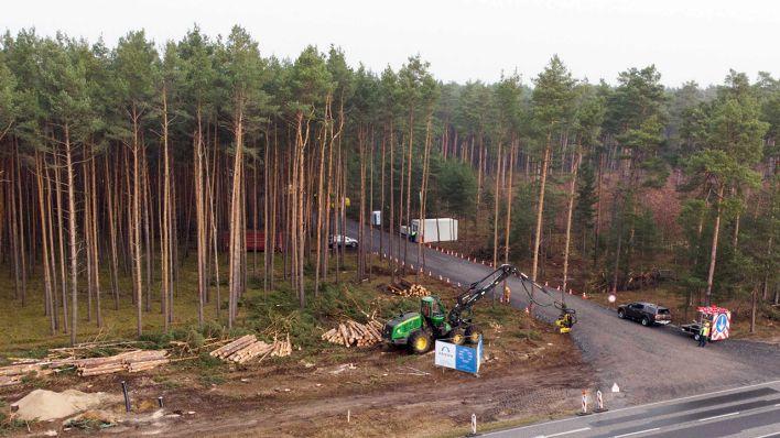 Mit einem Holzvollernter wird auf dem Tesla-Gelände in Grünheide ein Kiefernwald gerodet. (Quelle: dpa/Jörg Carstensen)