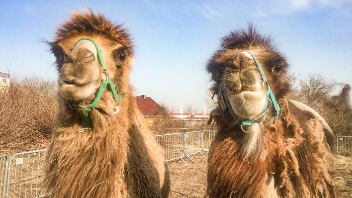 Circus Festival in Cottbus gestrandet