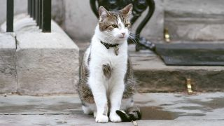 Larry, the 10 Downing Street Cat (Quelle: imago-images)