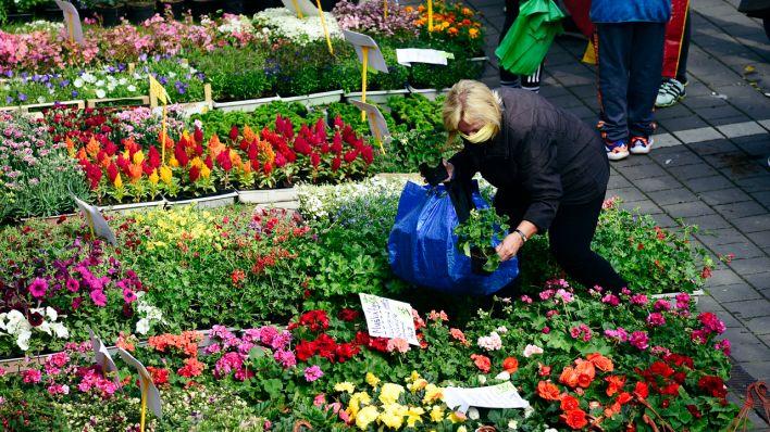 Gartenmärkte in Brandenburg dürfen jetzt wieder öffnen