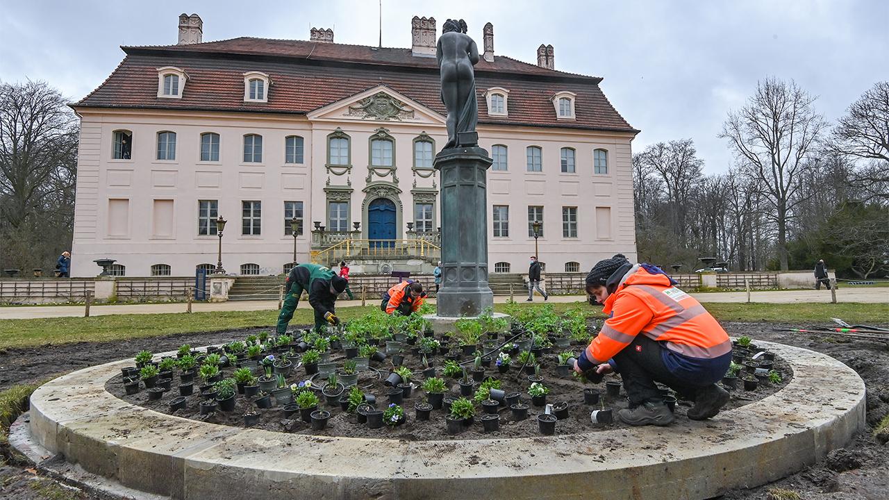Die Bepflanzung mit Frühjahrsblühern findet am neu gestalteten Venusbeet vor dem Schloss Branitz von der Stiftung Fürst-Pückler-Museum Park und Schloss Branitz statt (Bild: dpa/Patrick Pleuk)