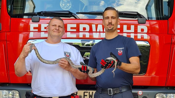 Kornnatter eingefangen: Schlange löst Feuerwehreinsatz in Cottbus aus
