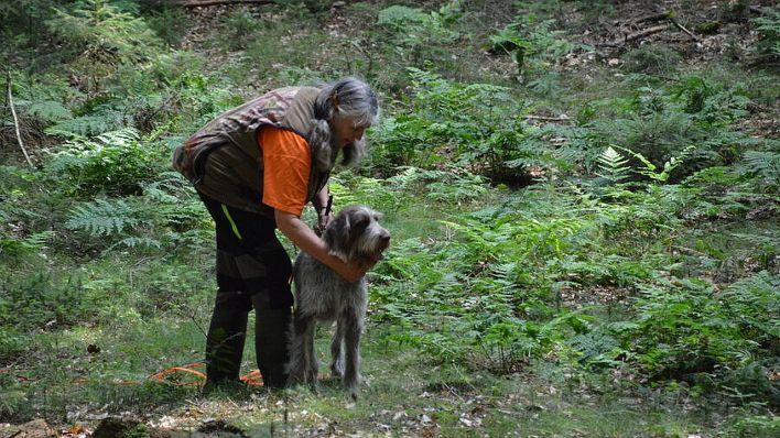 Escouade de chiens à la recherche de carcasses de sangliers ASP