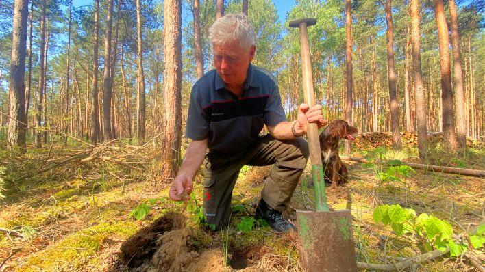 Hohe Brandgefahr: Der Wald ist wie ein Pulverfass